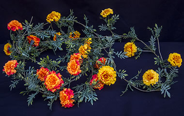 Silk Marigold Garland - Orange