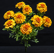 Silk Marigold Bouquets - Gold
