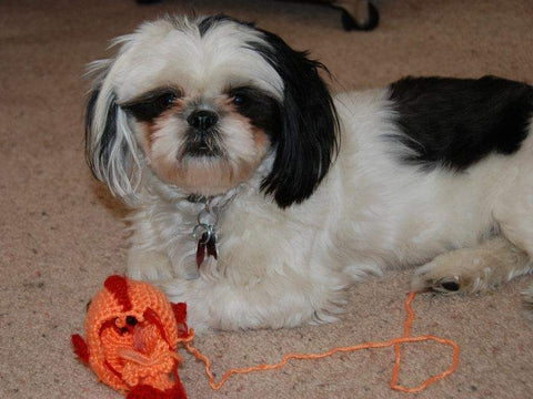 black and white shih tzu crocheted Amigurumi fish orange red bad dog bad puppy naughty pet StraightHooked Straight Hooked