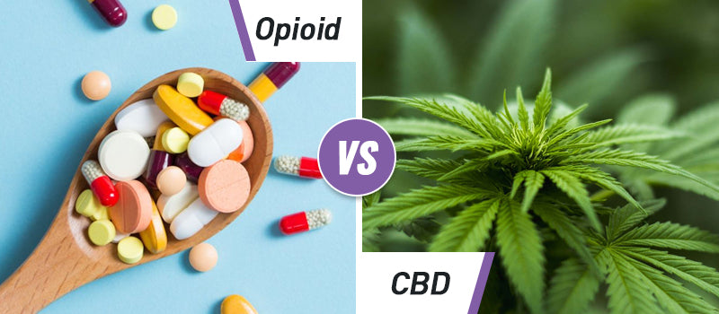 Can CBD Help Prevent Drug Addiction?