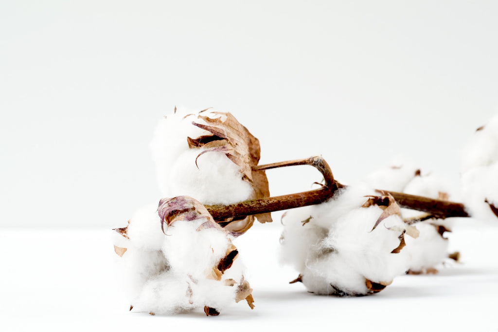 Cotton Photo by Marianne Krohn on Unsplash