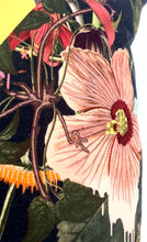 Load image into Gallery viewer, Christian Lacroix Orchid's Mascarade-Multicolor Pillow