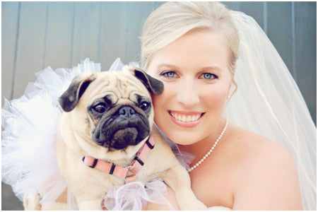 planning a wedding with pets