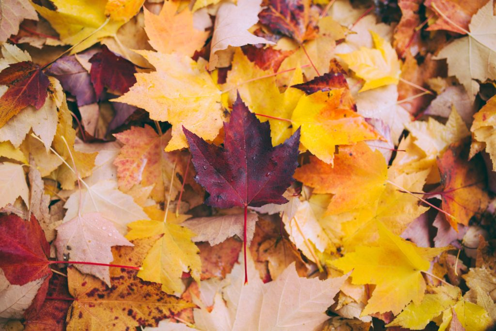 fall leaves | How to Pick the Perfect Fall Engagement Photos Outfit