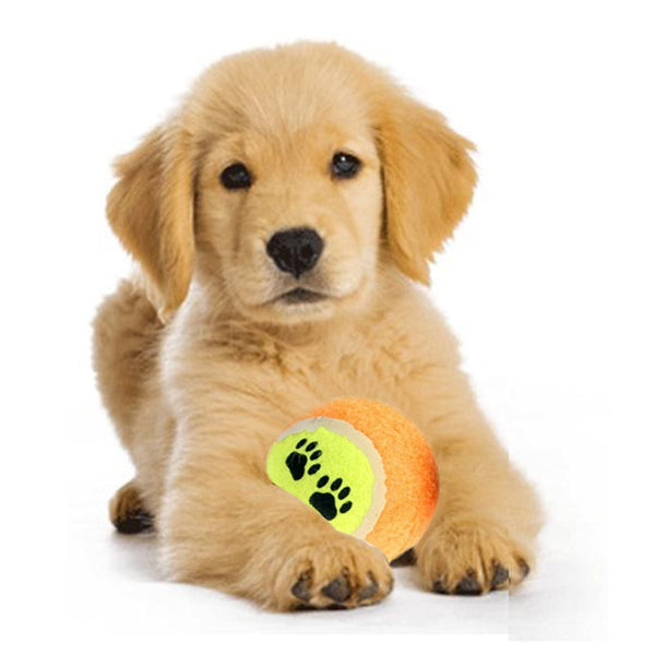 Run Fetch Throw Play Puppy Toys