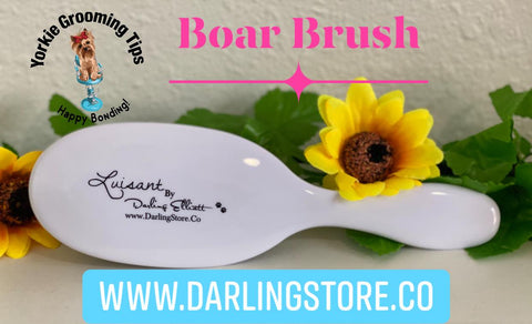 Luisant Boar Brush