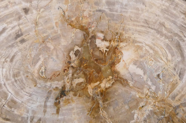 15 INTRIGUING FACTS AND BELIEFS ABOUT PETRIFIED WOOD