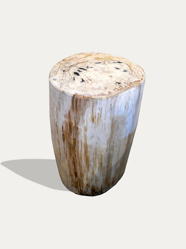 Petrified Wood Side Table / Stool