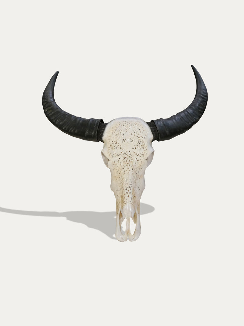 Large Hand Carved Buffalo Scull From Bali - kirschon
