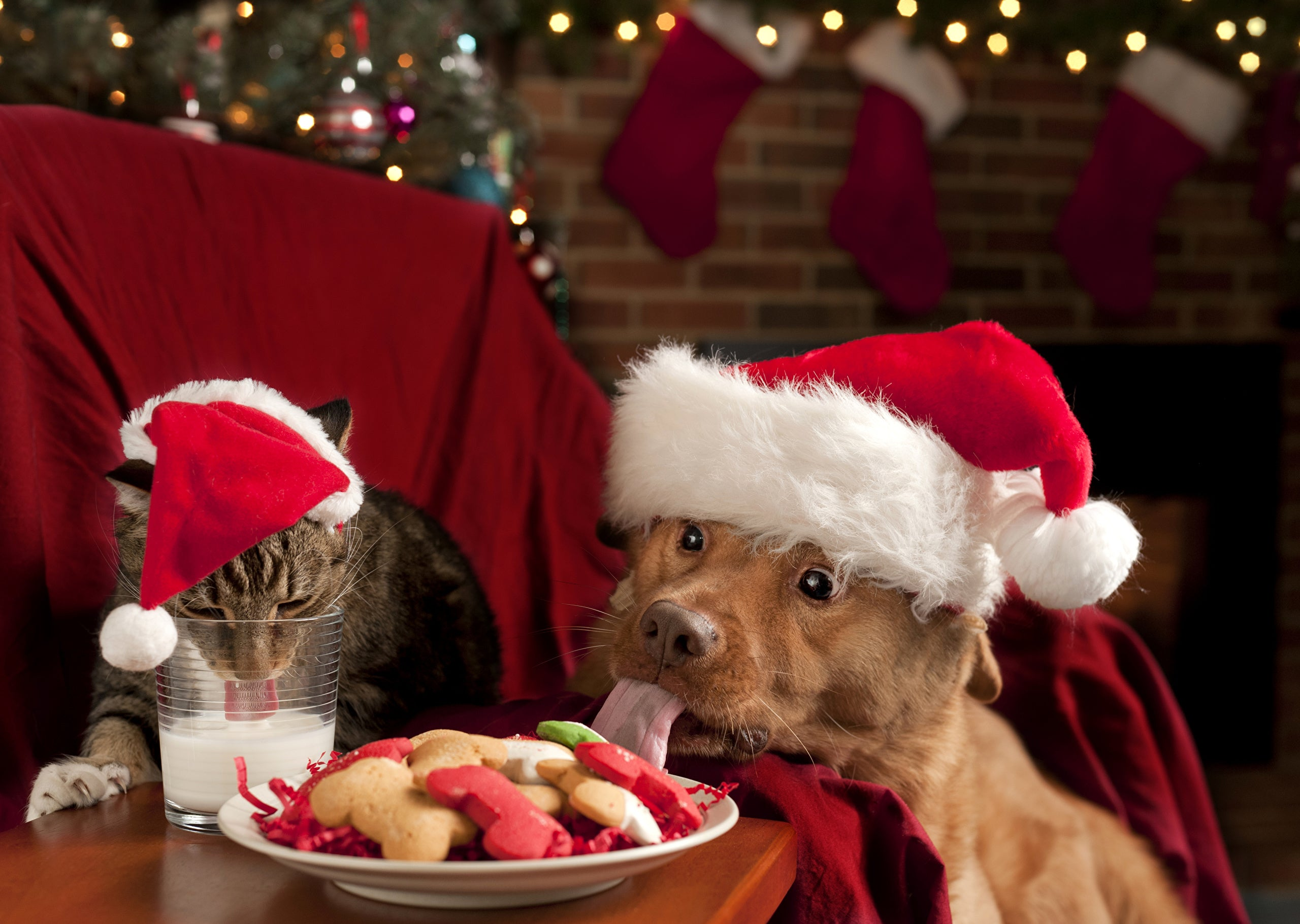Holiday survival tips for pets