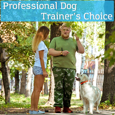 PetSpy M686B training shock collar professional dog trainer's choice. golden retriever orange collar in park