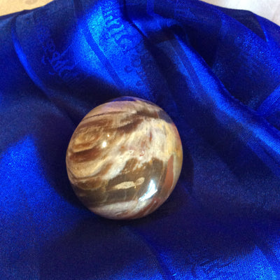 Petrafied Wood Pebble