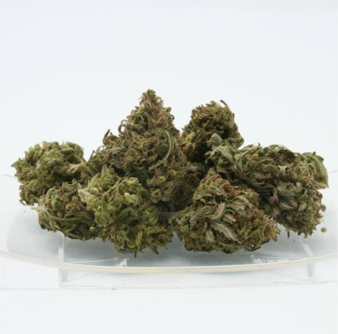 Terpene rich industrial hemp flower buds arranged on clear plate.