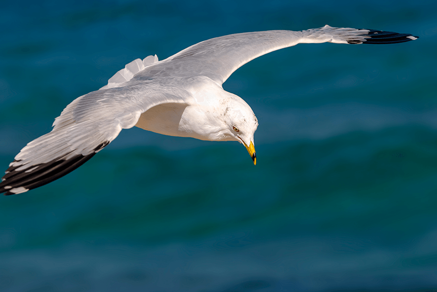Lavilo™ Greeting Cards - Seagull