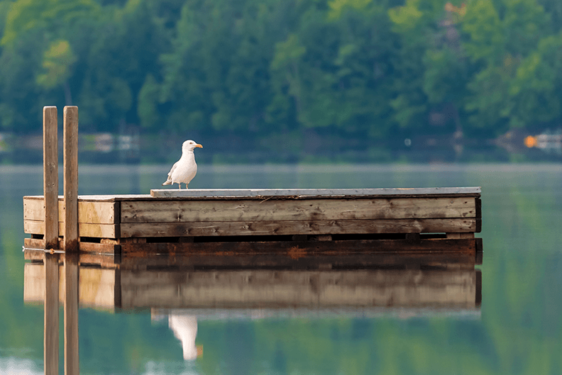 Lavilo™ Greeting Cards - Seagull on Floating Dock - A Peaceful Summer Morning