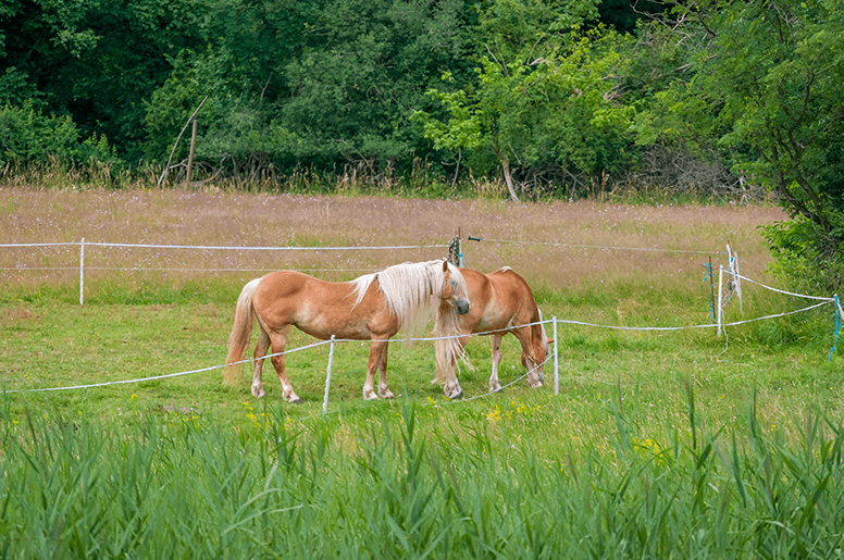 Lavilo™ Greeting Cards - Grazing Horses in a Pasture