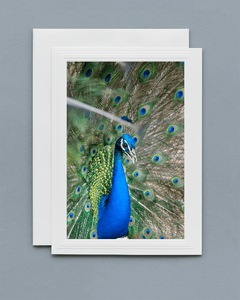 Lavilo™ Greeting Cards - Front Side - Peacock