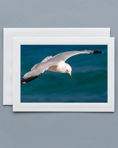 Lavilo Greeting Card - Front Image of a Seagull Over the Ocean