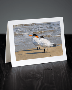 Lavilo™ Greeting Cards - Front Side Pair of Royal Terns Along the Beach