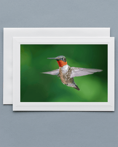 Lavilo™ Greeting Cards - Front Side Ruby-Throated Hummingbird