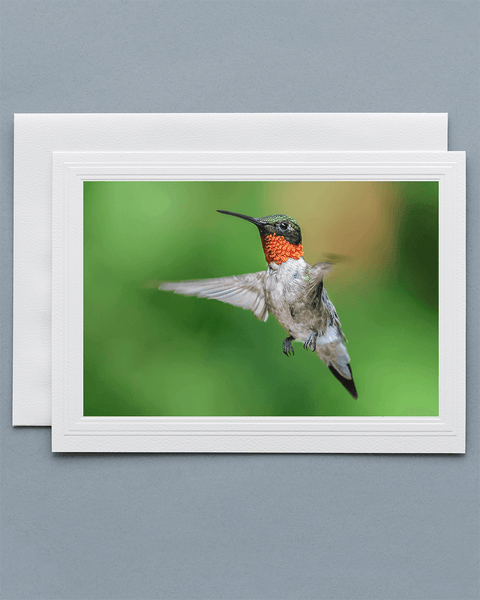 Lavilo™ Greeting Cards - Hovering Male Ruby-Throated Hummingbird
