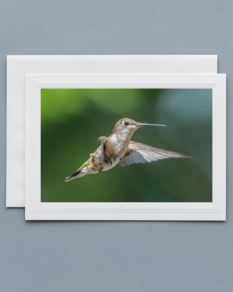 Lavilo™ Greeting Cards - Front Side Female Ruby-Throated Hummingbird