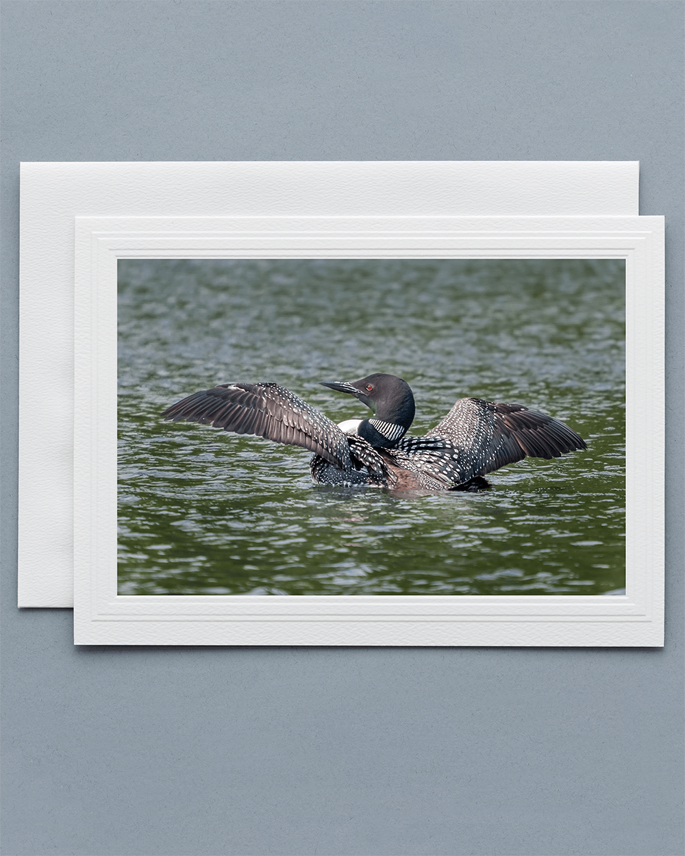 Lavilo™ Greeting Cards - Common Loon Summer Breeding Plumage