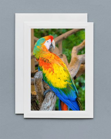 Lavilo™ Greeting Cards - Front Side - Macaw