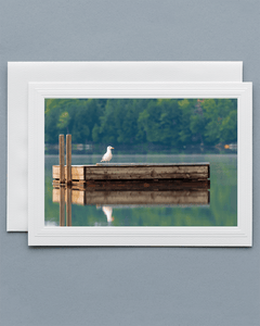 Lavilo™ Greeting Cards - Seagull on a Floating Deck