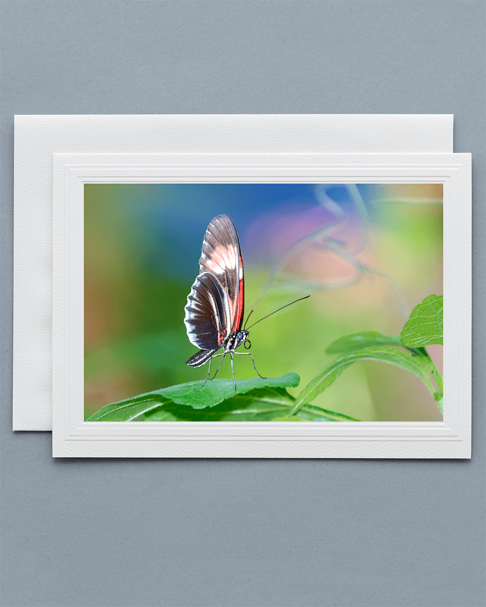 Lavilo™ Greeting Cards - Piano Key Butterfly