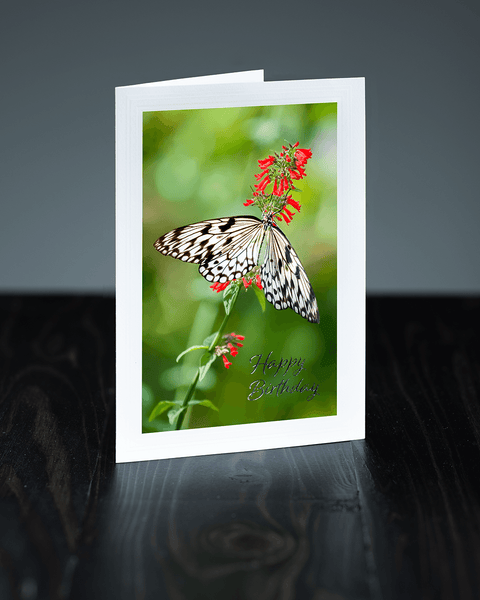 Lavilo™ Greeting Cards - Paper Kite Butterfly on a Flower