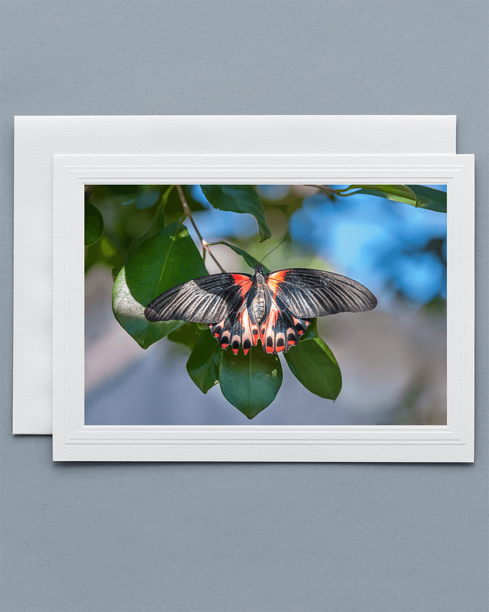 Lavilo™ Greeting Cards - Common Mormon Butterfly