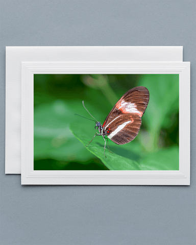 Lavilo™ Greeting Cards - Piano Key Butterfly resting at the edge of a leaf