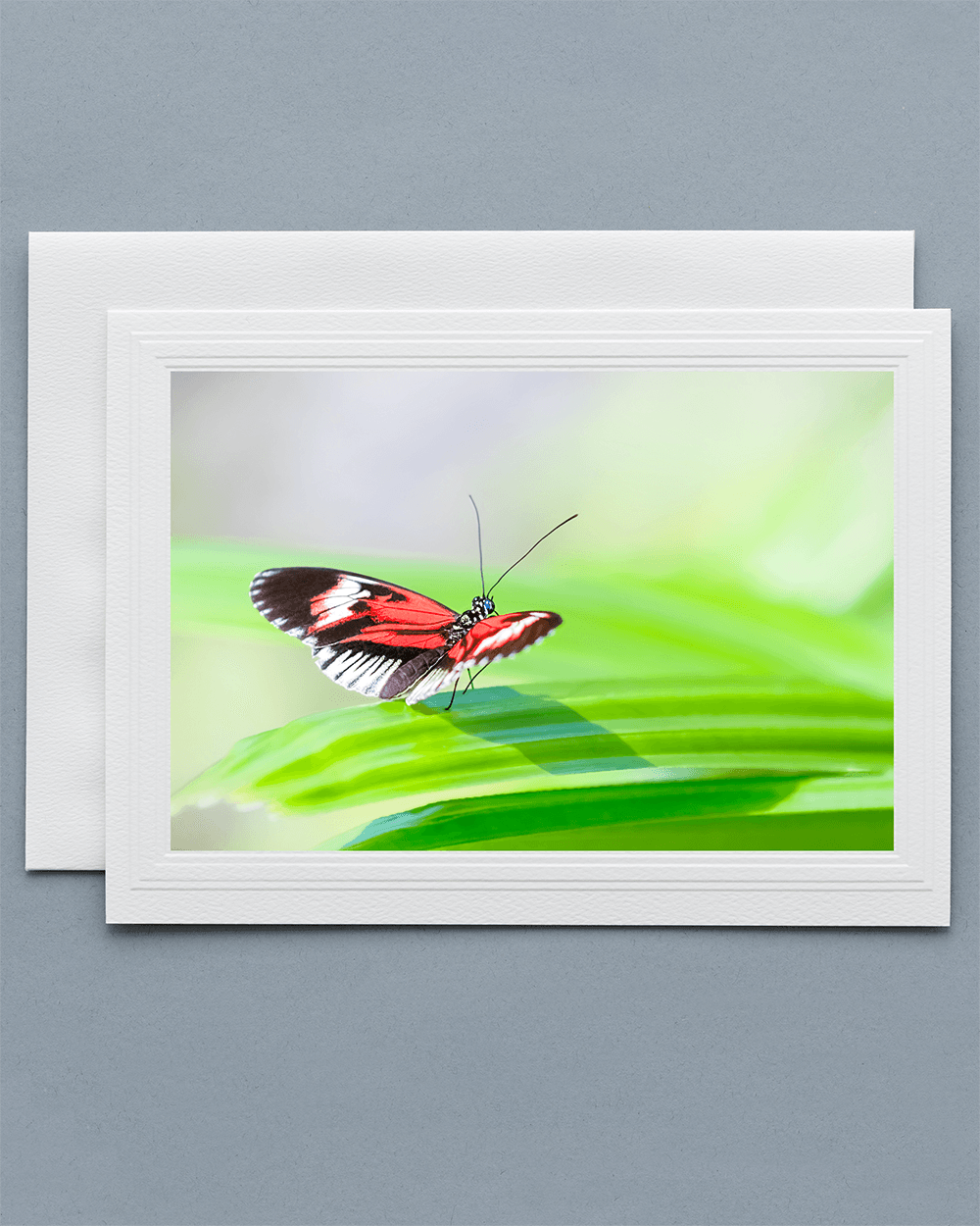 Lavilo™ Greeting Card - Piano Key Butterfly on a leaf