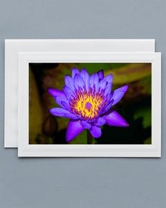 Lavilo™ Greeting Cards - Front Side Blue Egyptian Lotus