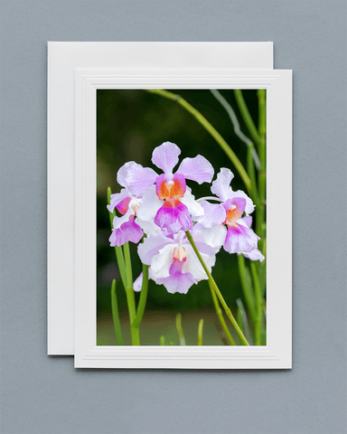Lavilo™ Greeting Cards - Front Side - Vanda 'Miss Joaquim' Orchid