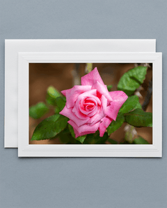 Lavilo™ Greeting Cards - Front Side - Pink Rose