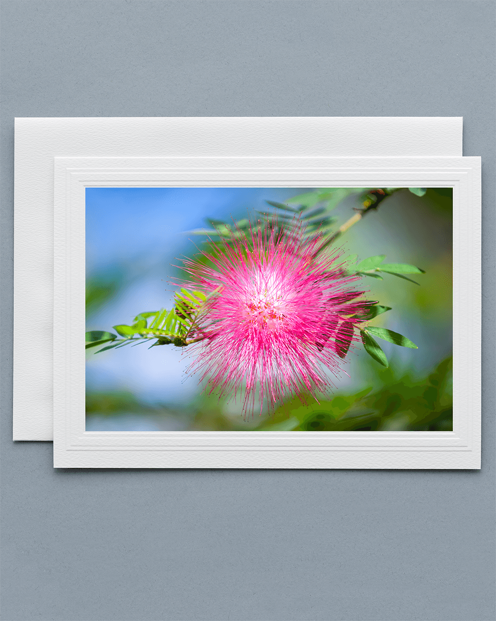 Lavilo™ Greeting Cards - Front Side - Flower of the Mimosa Tree