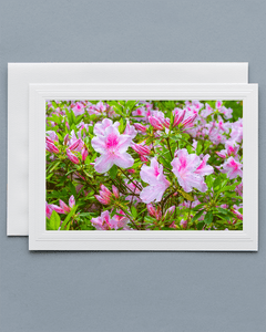 Lavilo™ Greeting Cards - Front Side George Tabor Azalea