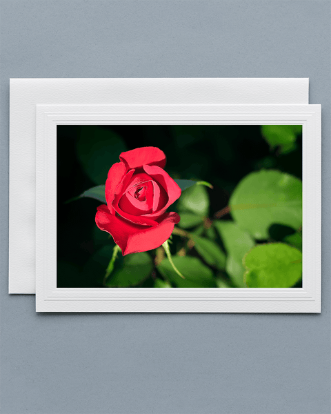 Lavilo™ Greeting Cards - Front Side - Deep Red Rose