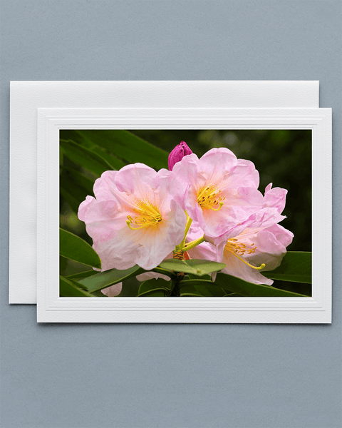 Lavilo™ Greeting Cards - Front Side - Azalea Flower