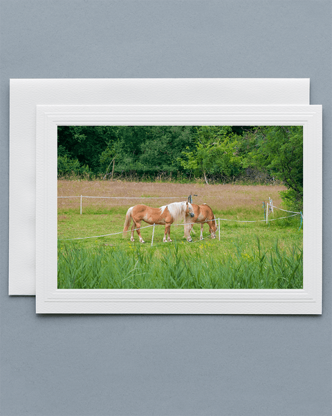 Lavilo™ Greeting Cards - Front Side Grazing Horses in a Pasture