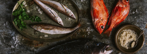 Fresh seafood and freshwater fish from Foley Fish