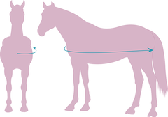 Horse Rug Sizing Guide