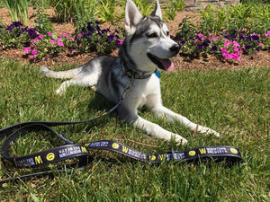 Wormtown Dog Collar