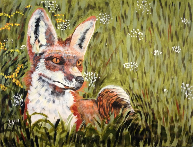 Fox in Meadow
