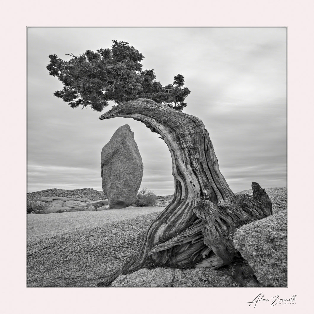 April 2019: Joshua Tree and Obelisk (Black & White Version)