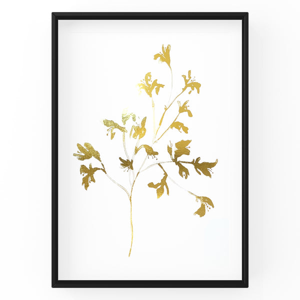 Kangaroo Paw Wall Art Foil Prints