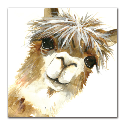 Rachel Brown - Alpaca