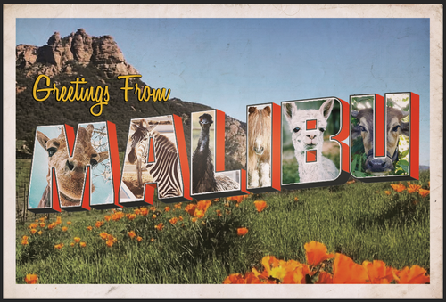 Postcard - Greetings From...